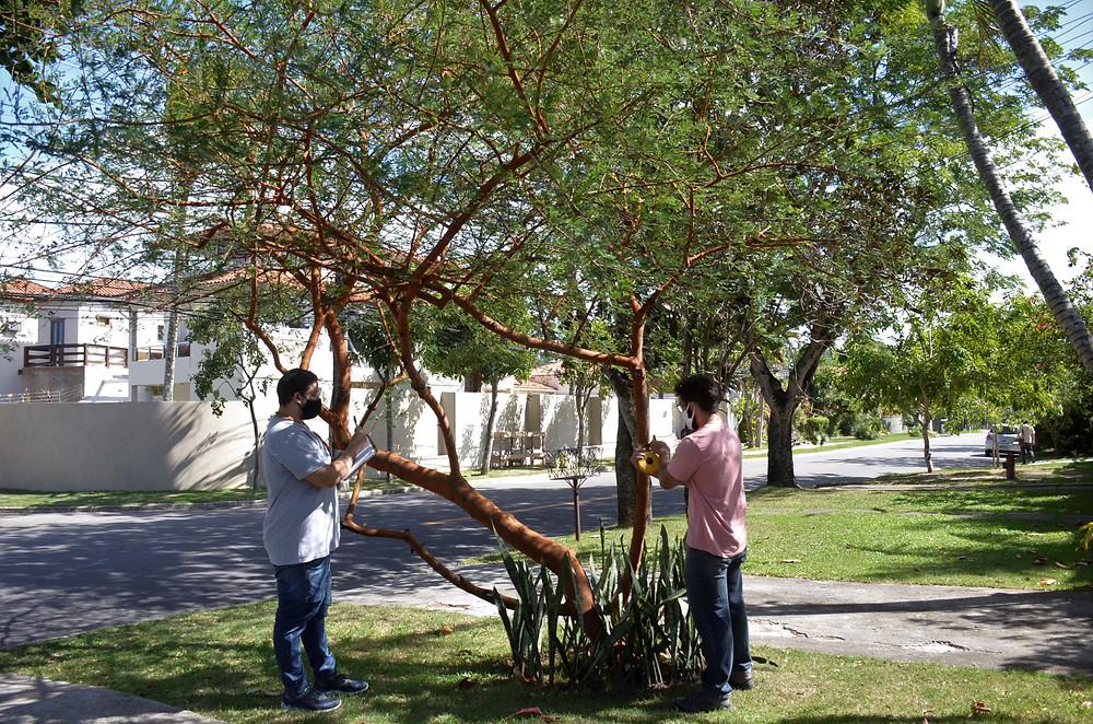 Programa Arboribus é um projeto censitário da flora urbana da cidade/Foto: Bruno Eduardo Alves