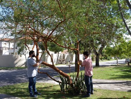 Niterói tem 23 mil árvores cadastradas em 29 bairros