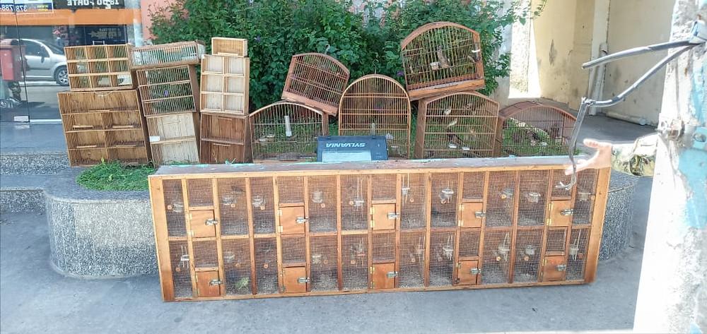 Animais serão devolvidos à natureza/Foto: Divulgação