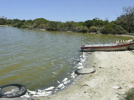 Inea é acionada para investigar mortes de peixes em Maricá