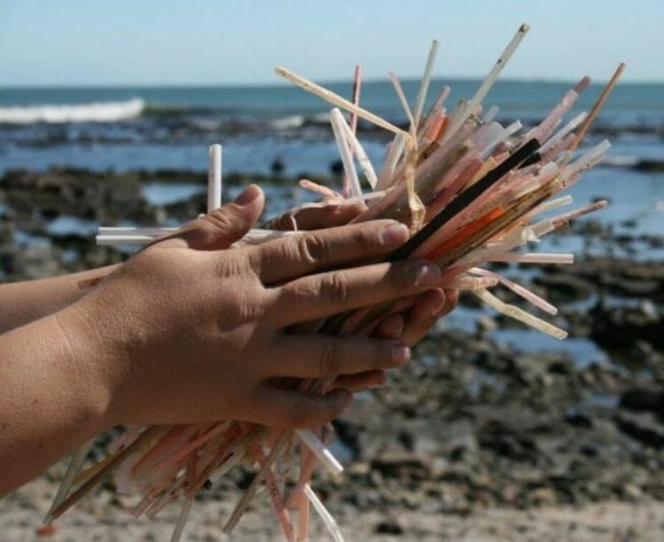 Canudos são verdadeiro terror pra vida marinha/Foto: Divulgação