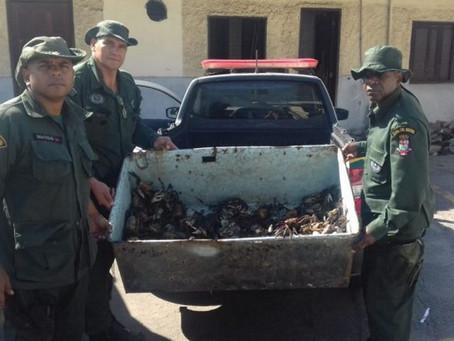 Guarda Municipal apreende 1.340 caranguejos em Niterói