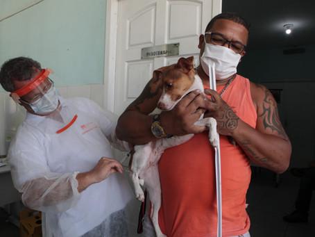 Niterói vacina 8 mil cães e gatos contra a raiva