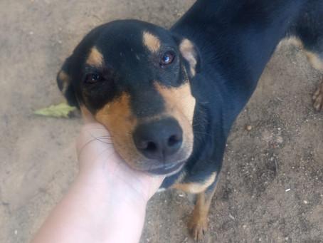Niterói fará feira virtual para adoção de cães e gatos neste sábado