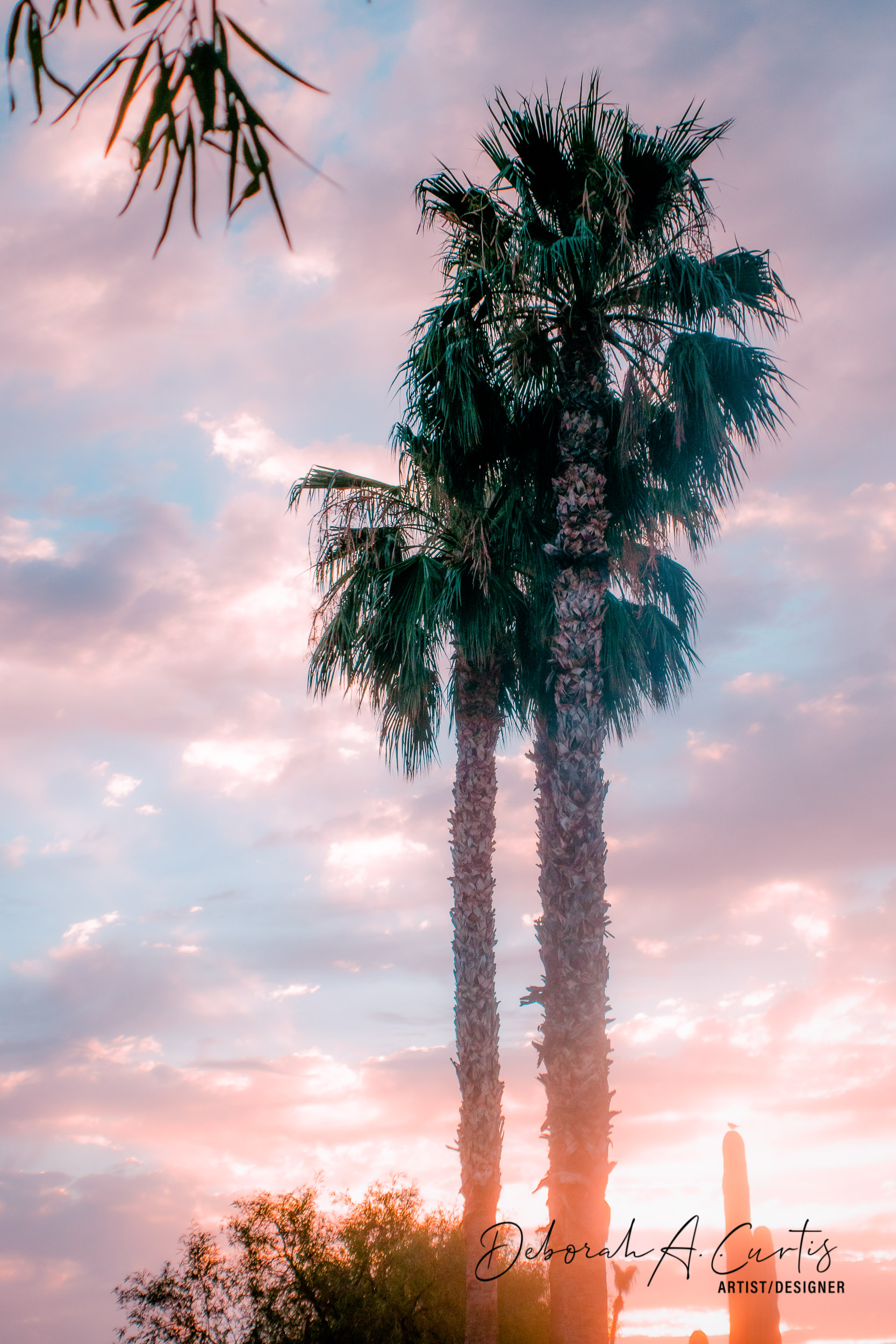 2020-arizona-sunrise-palm-trees-dove--sh