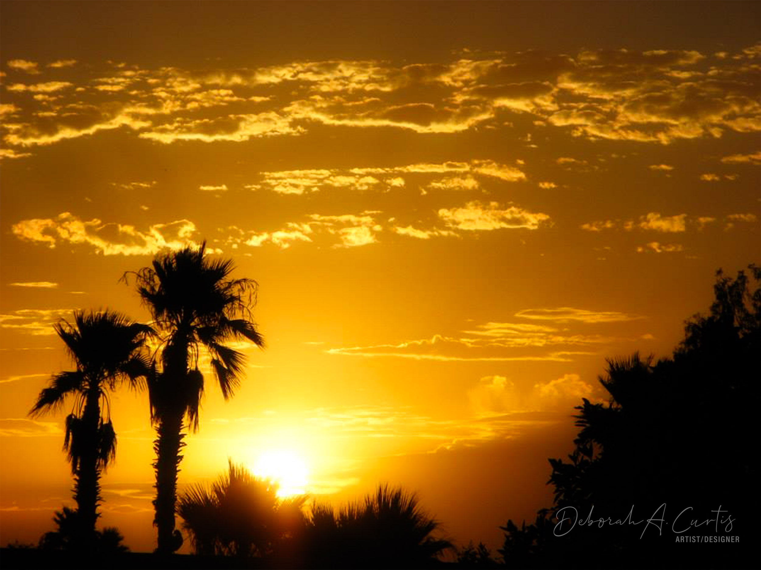sunrise-sun-city-west-arizona-palm-trees