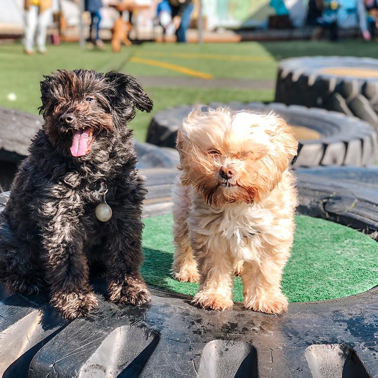 Small Dog Meet-Up