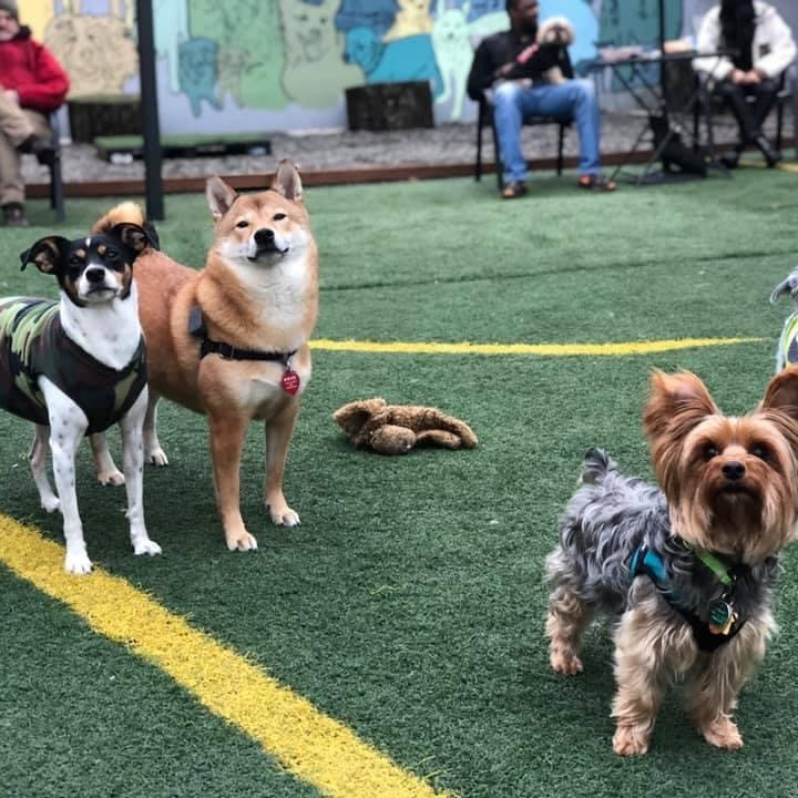 Small Dog Meet Up - 2nd Saturday of the Month