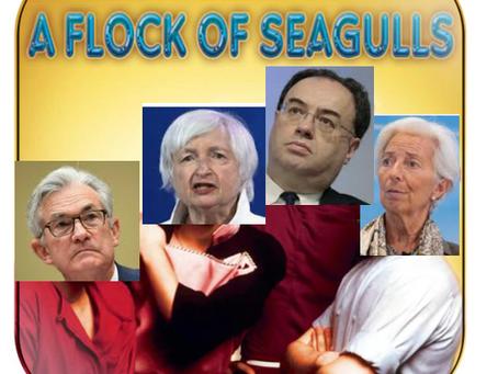 A Squawk of Seagulls