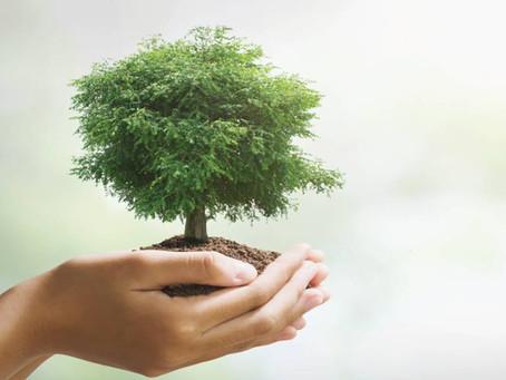 Ripartenza green: benefici economici e ambientali dello sviluppo sostenibile