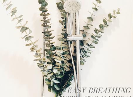Easy Breathing With Eucalyptus