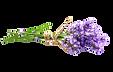 AdobeStock_86283805_edited.png