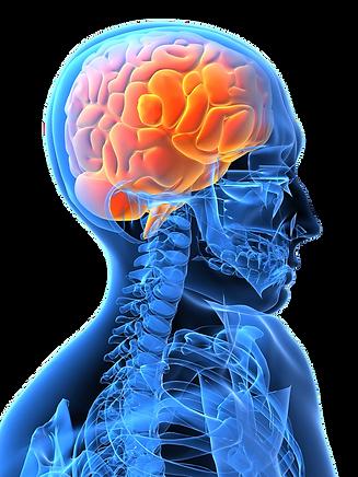 gator-color-brain.png