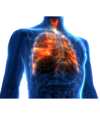 Lungs_edited.png