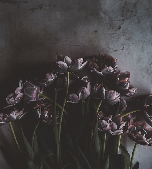 Dark%20and%20moody%20tulips_edited.png