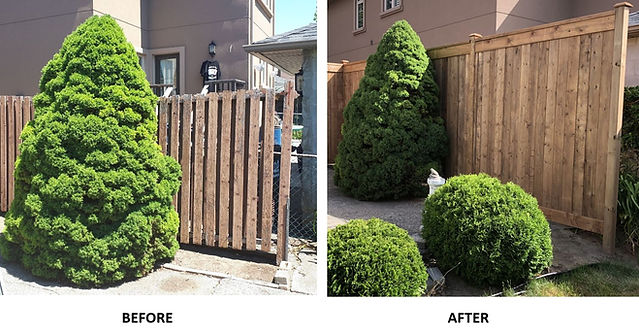 Richard Fence Before & After.jpg