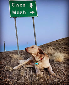 Cisco Dog