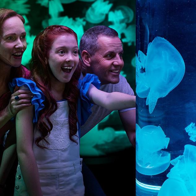 Sea-Jellies-Illuminated.jpg