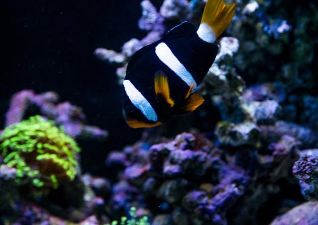 jari_fish-38.jpg