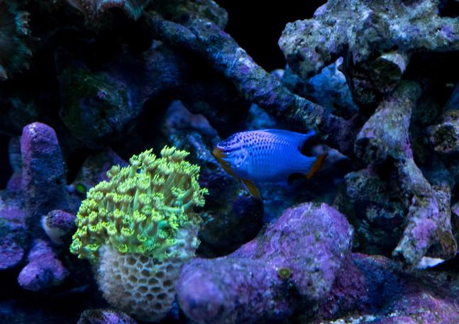 jari_fish-45.jpg