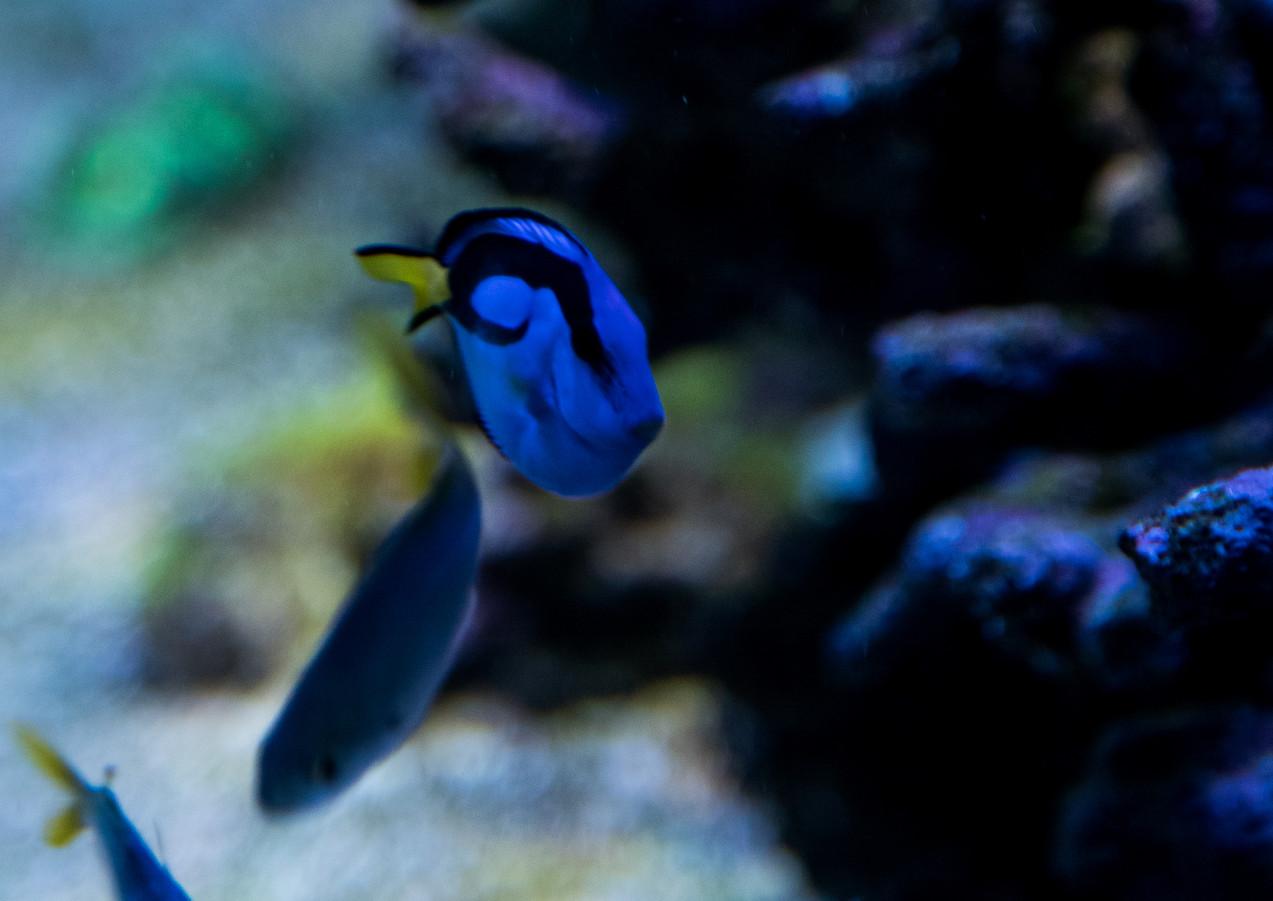 jari_fish-40.jpg