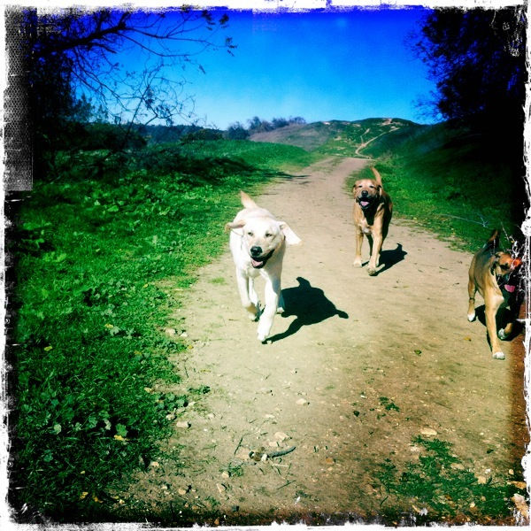 Dogs hiking on a trail in Los Angeles
