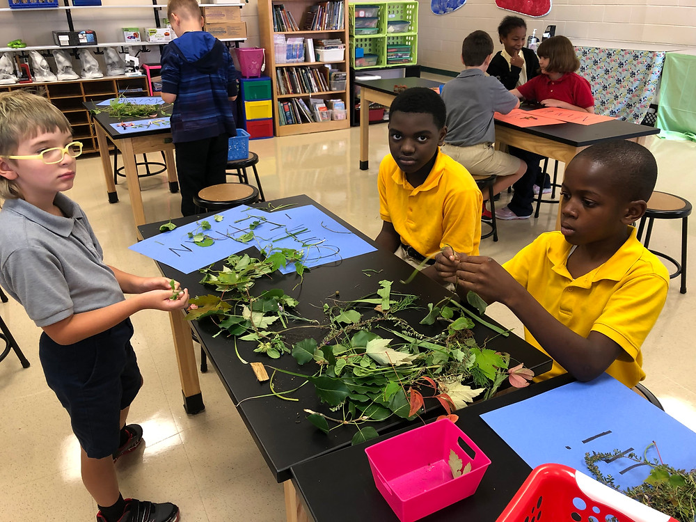 students examining leaf shapes