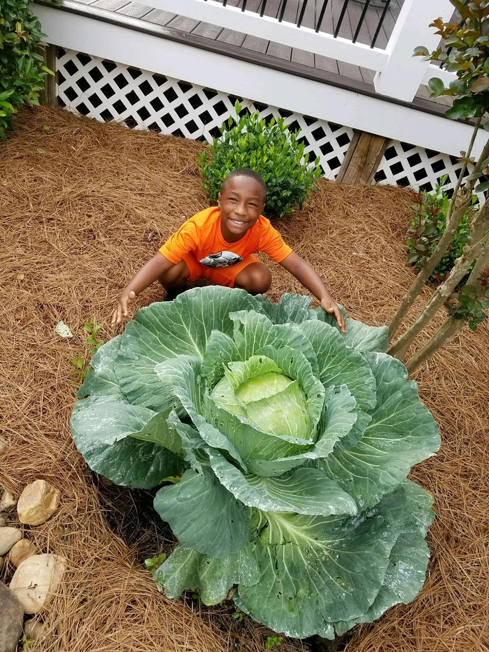 Braylon Wright and his giant cabbage