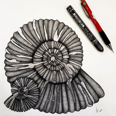 Ammonite drawing_pencil sketch_fine art_