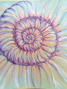 Ammonite by Gill Williams