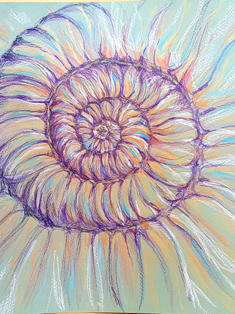 Ammonite by Gill Williams