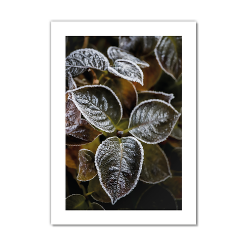 Frosty Flower Collection - Leaf