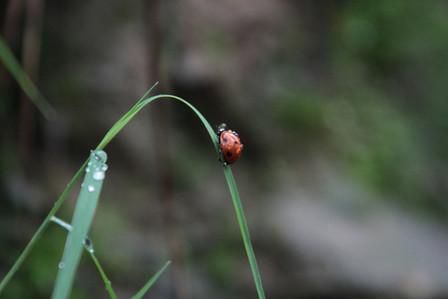 Free Range Ladybug
