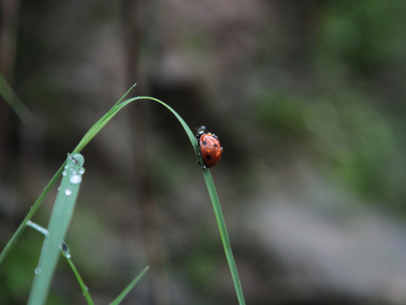 Why we need more ladybugs