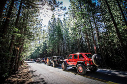 Jeeps in Trees