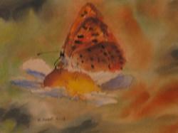 The+orange+butterfly+23x30+cm+watercolou.JPG