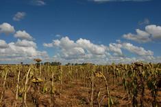 Kopie von Afrika 045.jpg