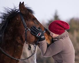horse-2151231_1920.jpg