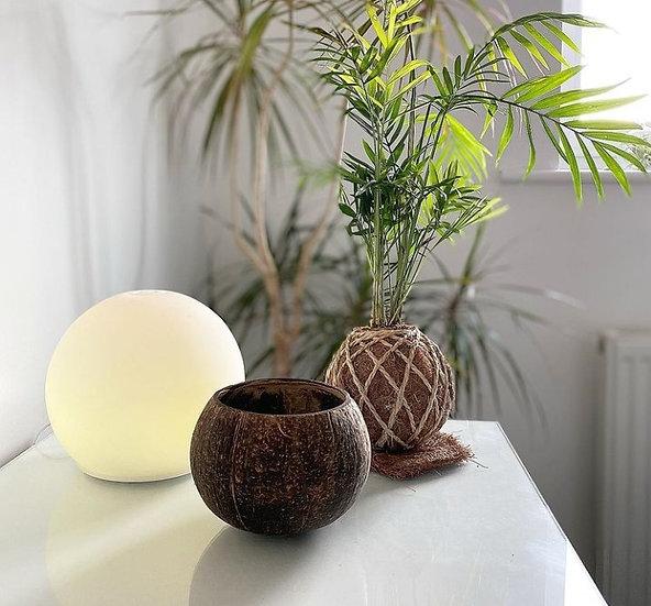 Vela Sustentável E Vegana 100% Natural De Bambu