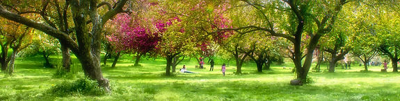 QBG Cherry Orchard Scene copy.jpg