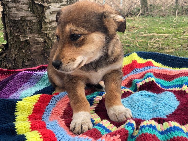 Marcie, born January, small