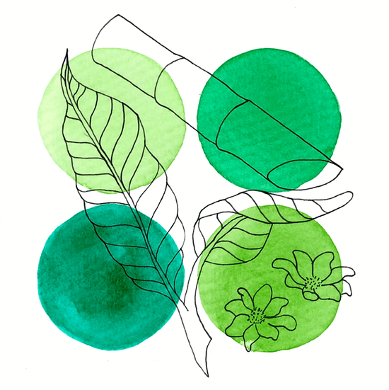 4 green circles with depictions of flowers, cane sugar and cacao leaves outlined on top
