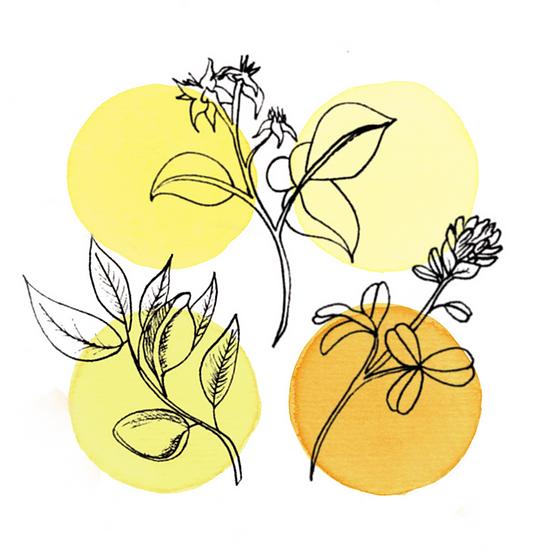60oz - Costa Rica Tarazzú Honey