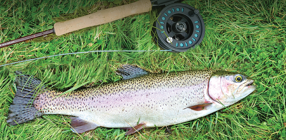 fish and flyrod_edited.png