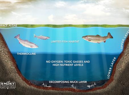 Fish kills, foul odours and algae blooms.