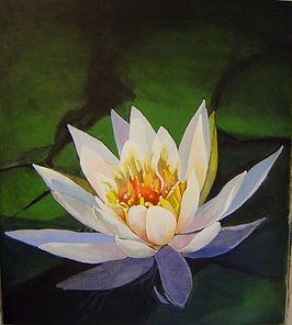 water_lilies_in_bloom-min.jpg