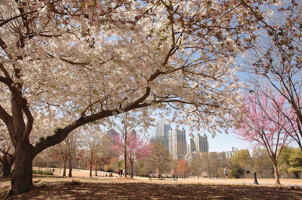 Piedmont-Park-Atlanta.jpg
