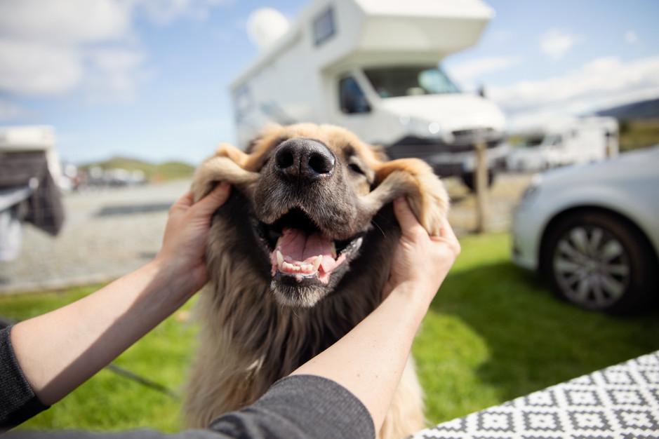 Dog Smiling RV