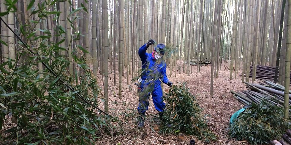 【中止】公開竹林整備Day 2020.3.29