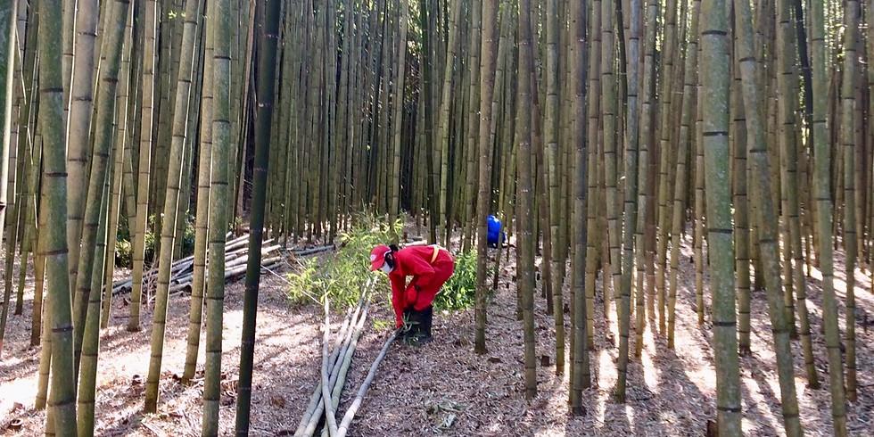 【終了】公開竹林整備Day 2020.3.8